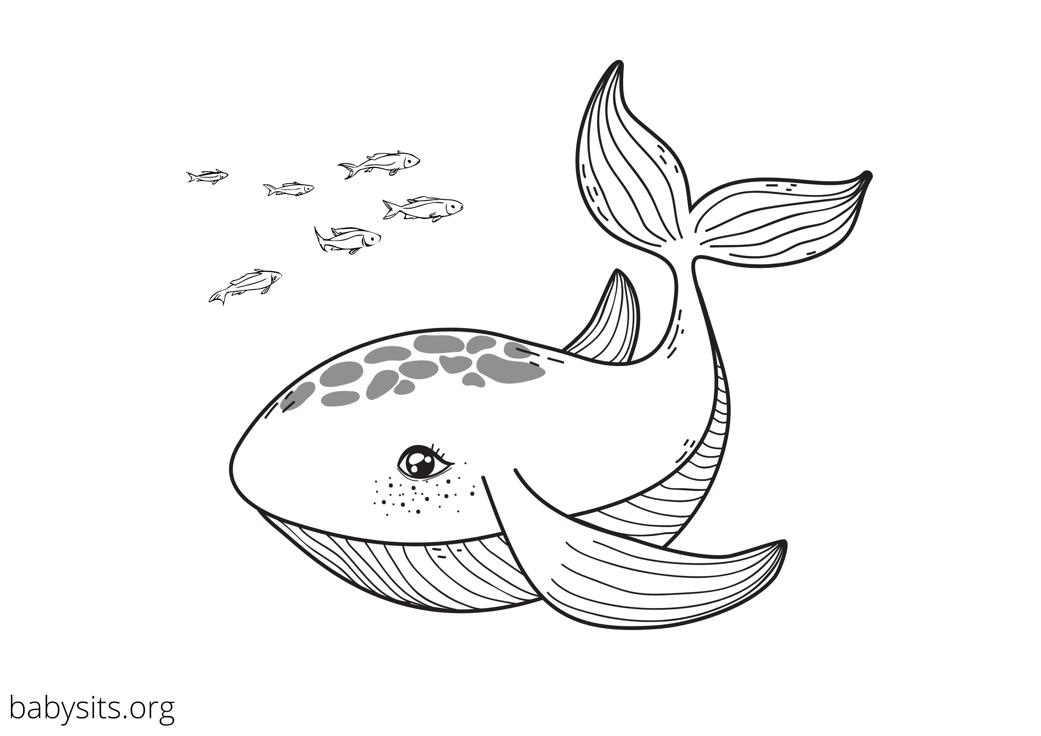 Whale colouring page
