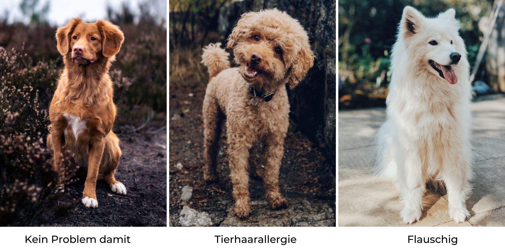 Hunde Fell- und Haartyp