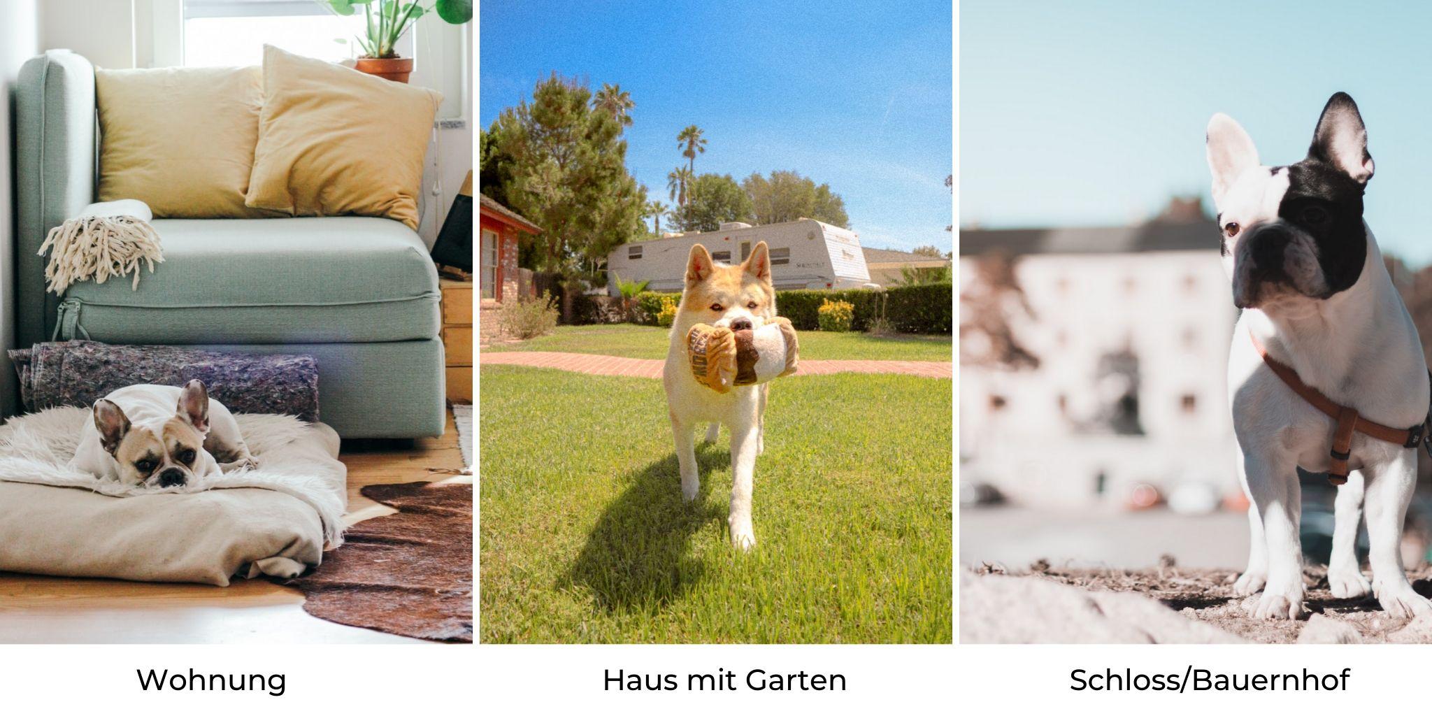 Wohnung für Hund