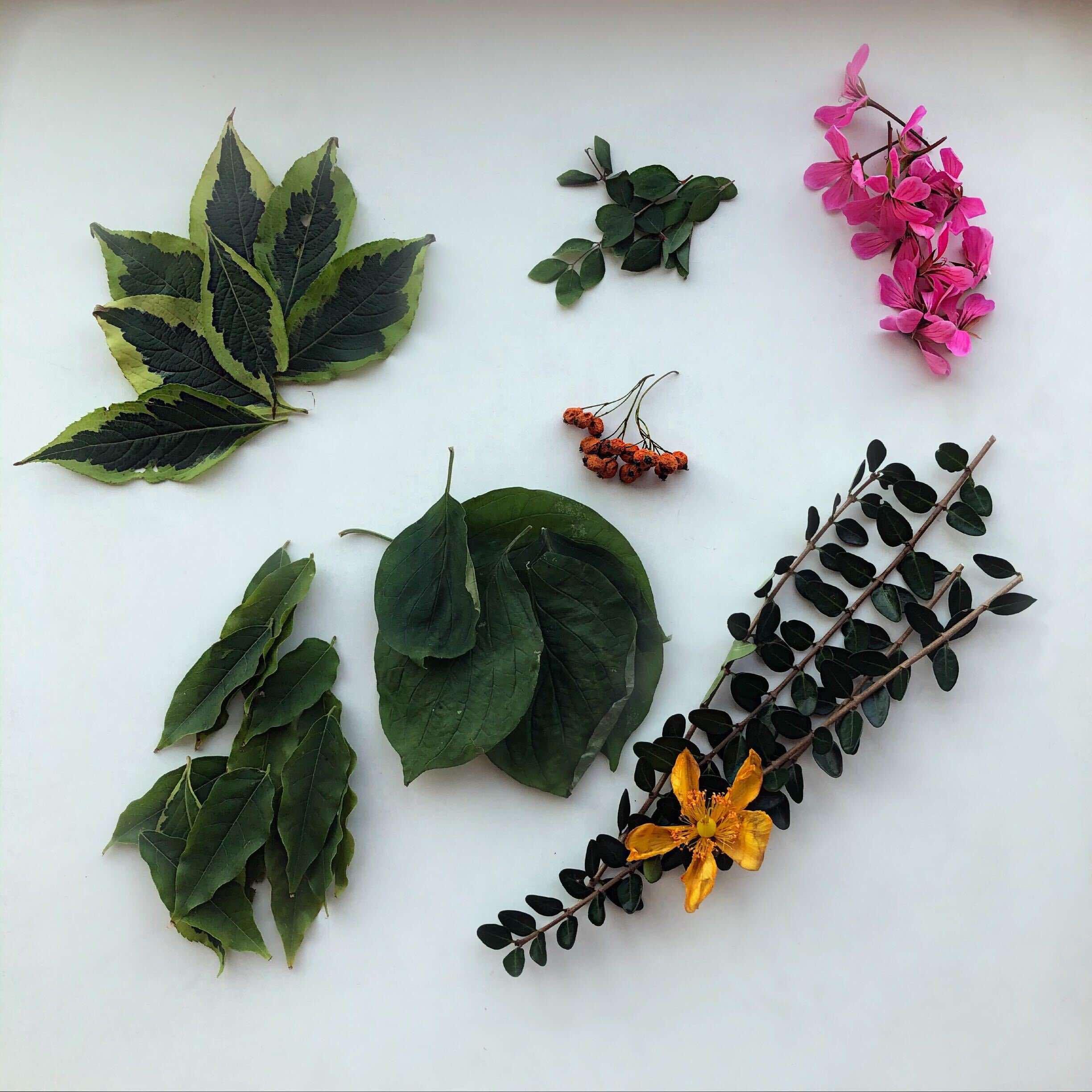 kunst og håndverk med blader
