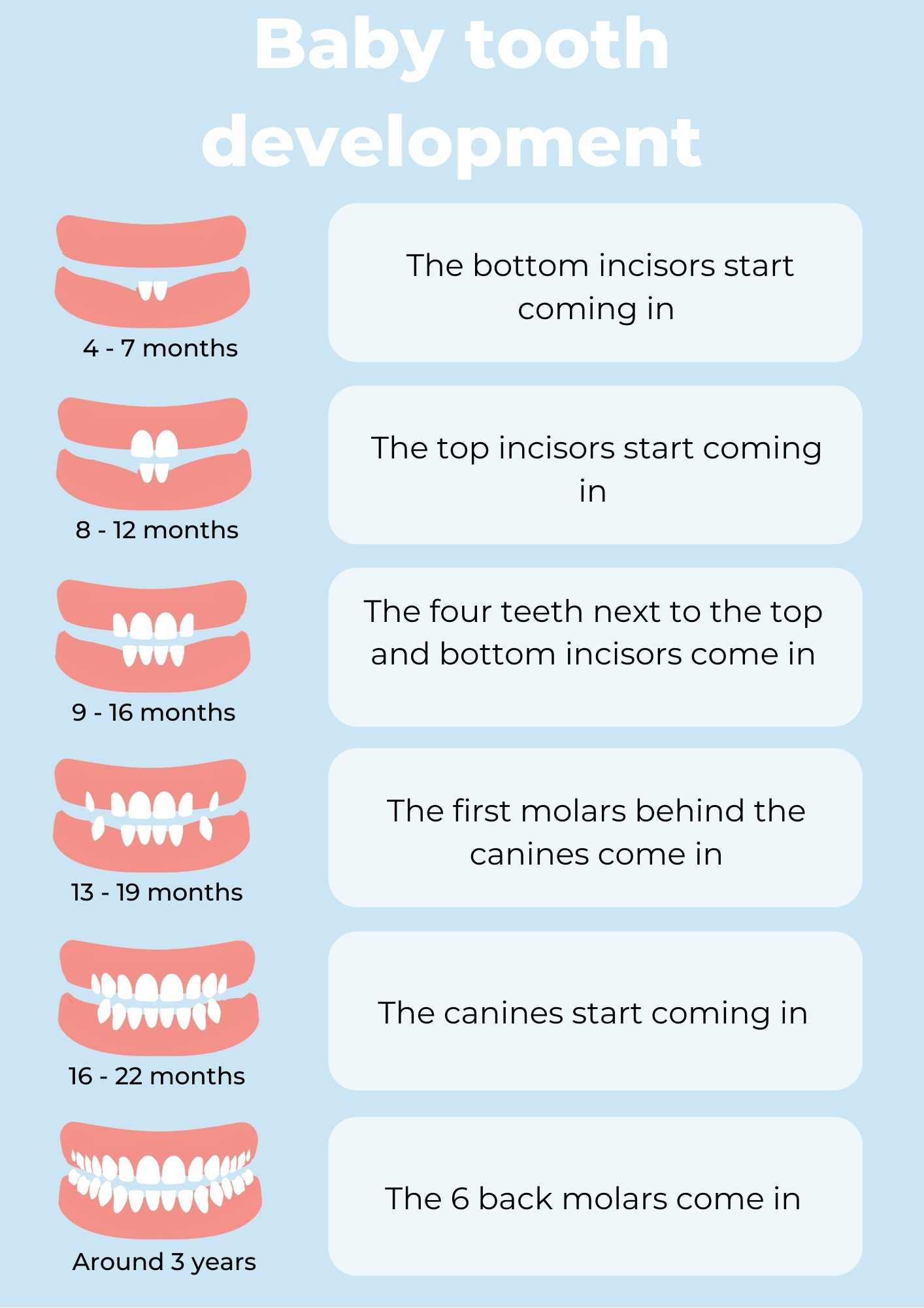 when do the first teeth come in?