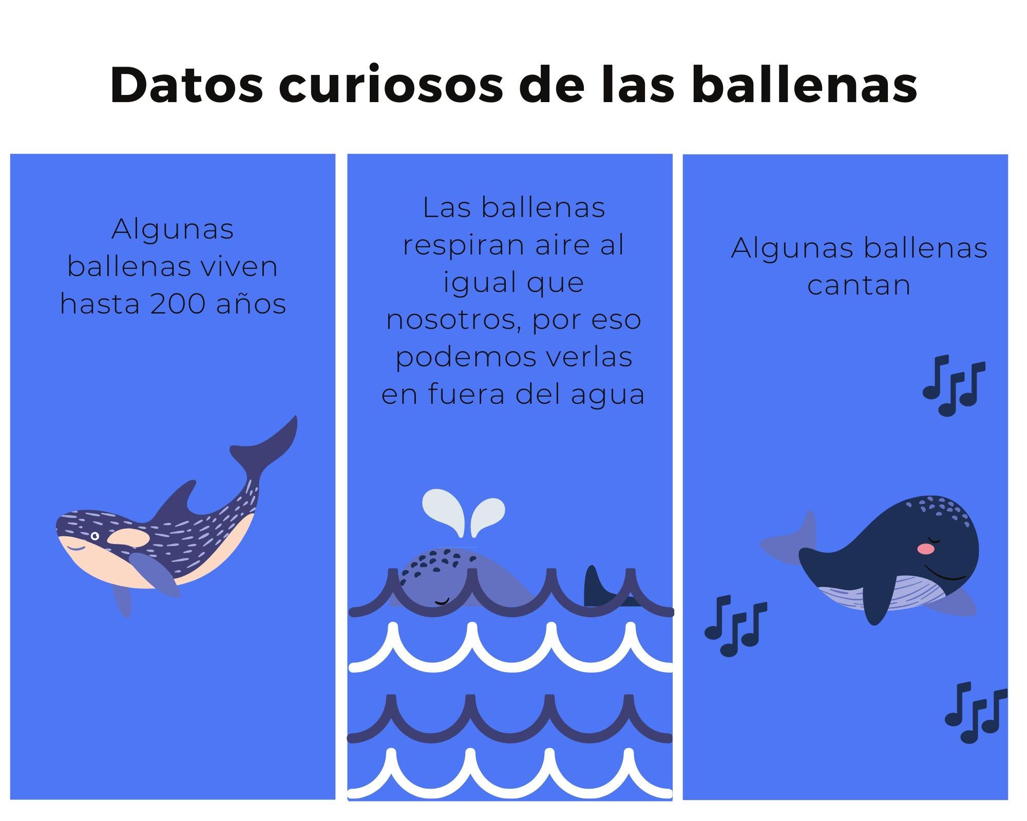 Datos curiosos sobre las ballenas