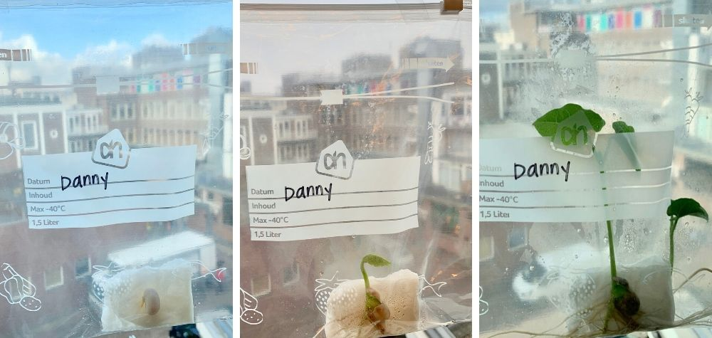 Experimento para hacer con niños de plantas