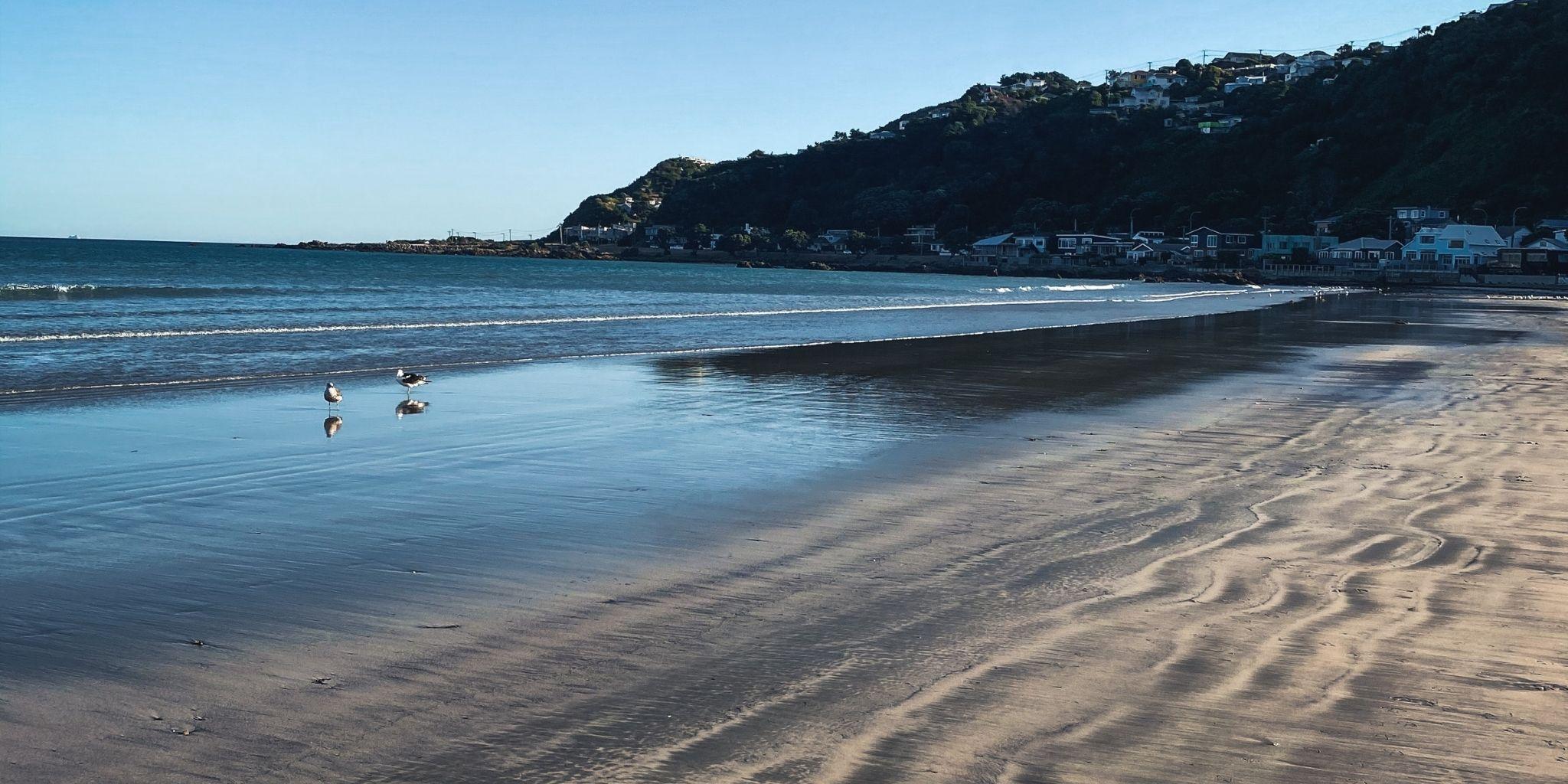 Wellington Beaches and Bays