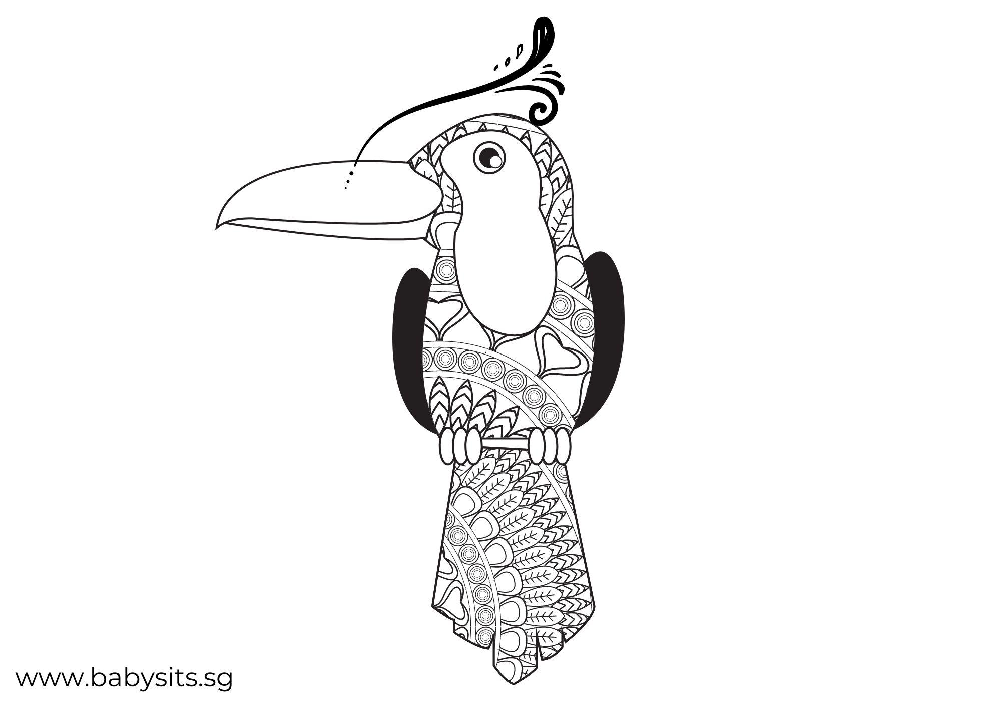 Hornbill bird colouring page