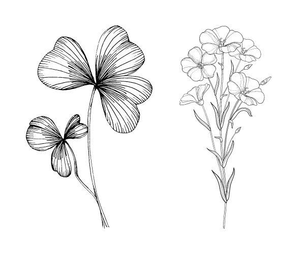 Northern Ireland national flowers