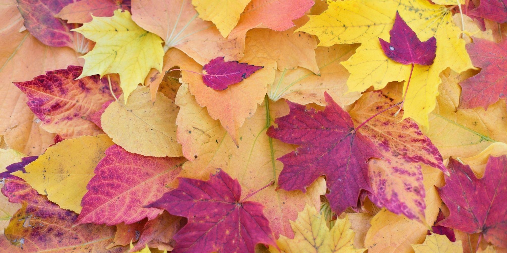 Lavoretti fai da te | Spiegare il cambiamento delle stagioni
