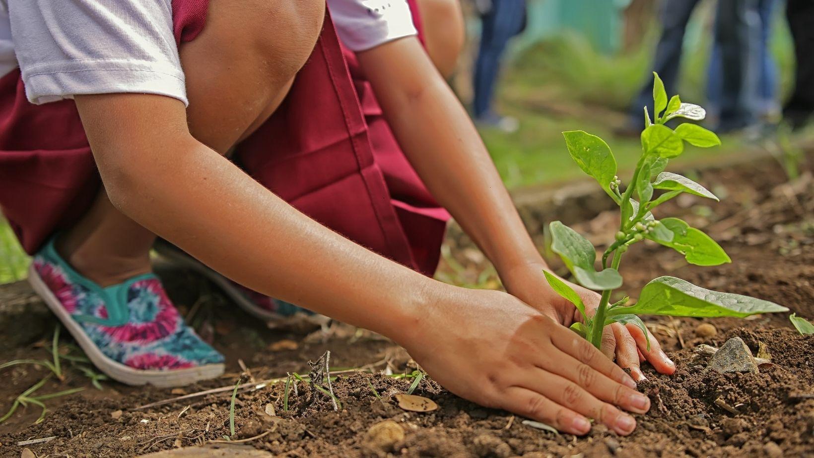 집에서 할 수 있는 아이들을 위한 식목일 DIY