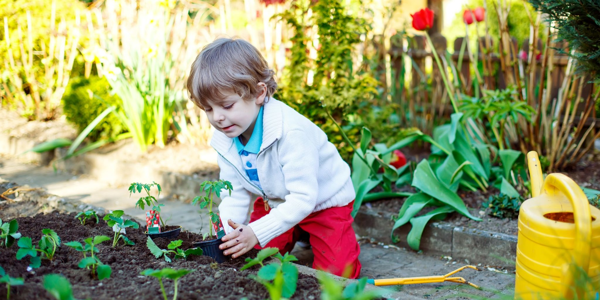 Plantando com as crianças