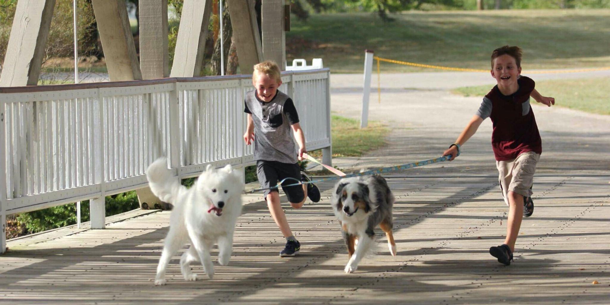 Družinski kviz o psih