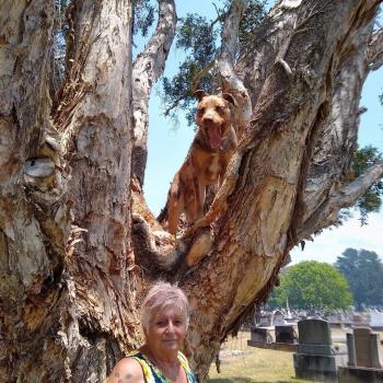 Babysitter in Whanganui: Judy