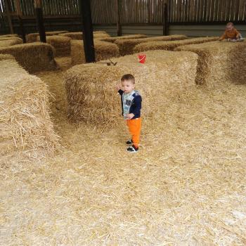 Babysitting job in Hull: babysitting job Autumn