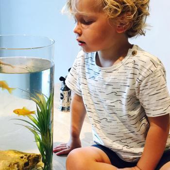Parent Wevelgem: job de garde d'enfants Eef