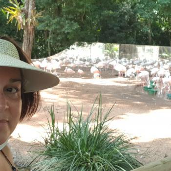 Emprego de babá em Foz do Iguaçu: emprego de babá Jaqueline