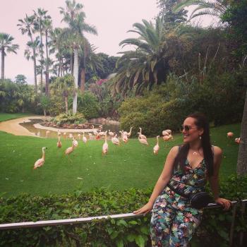 Canguro Santa Cruz de Tenerife: Hara