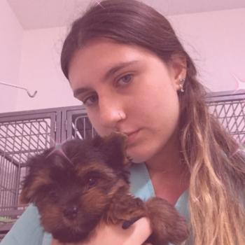 Babysitter in Florianópolis: Ana Sofia